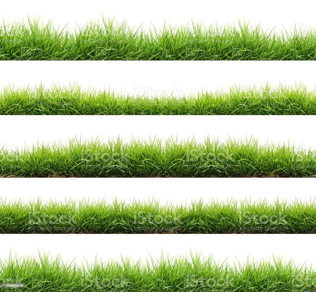 Resorte verde hierba fresca aislados - foto de stock
