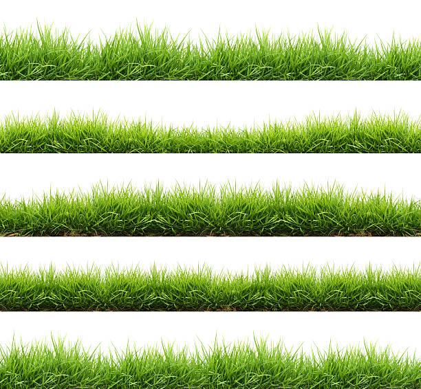fresh spring green grass isolated stock photo
