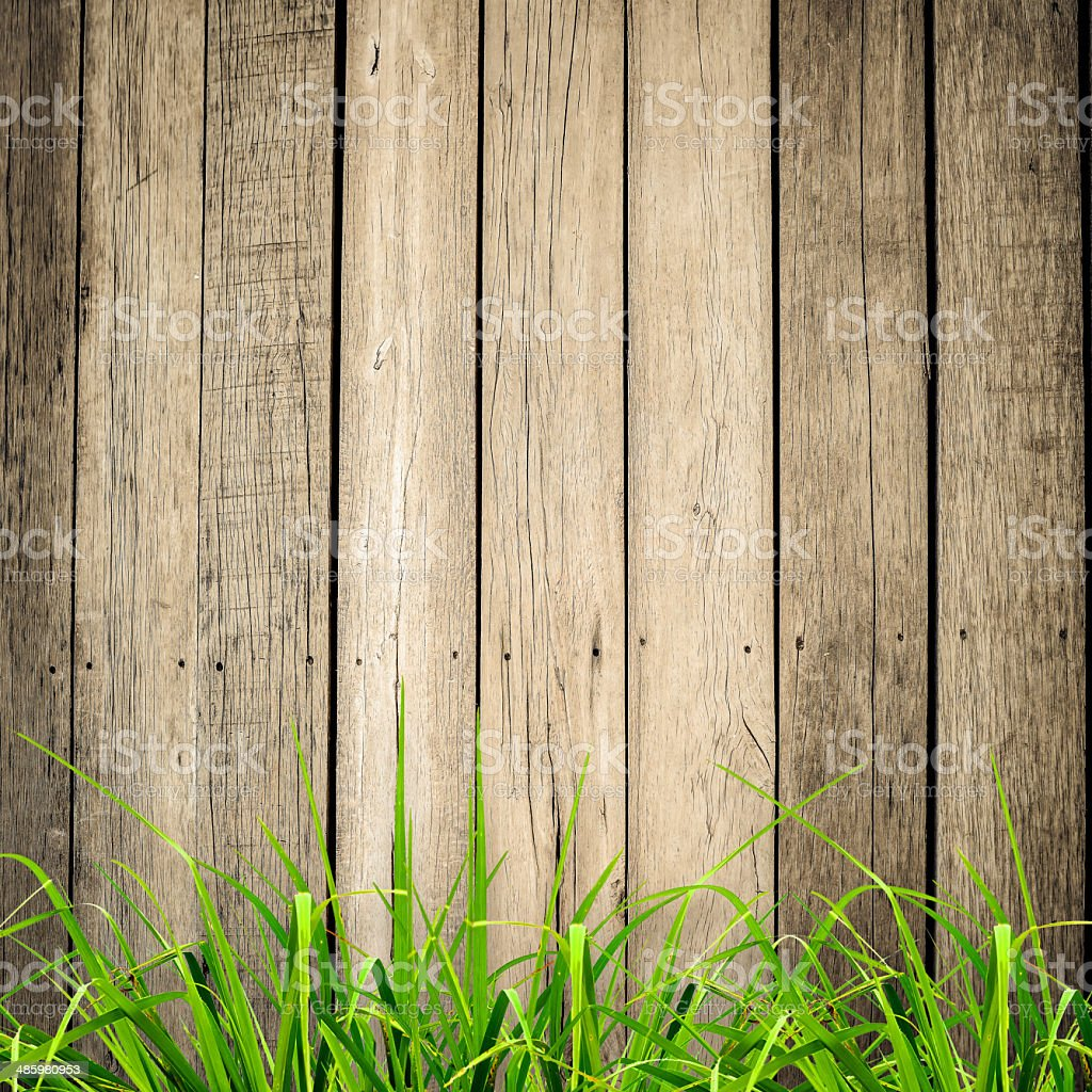 Fresh spring green grass over wood fence background stock