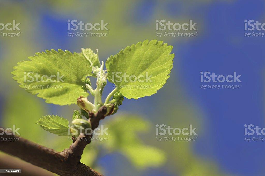 fresh spring green leaf royalty-free stock photo
