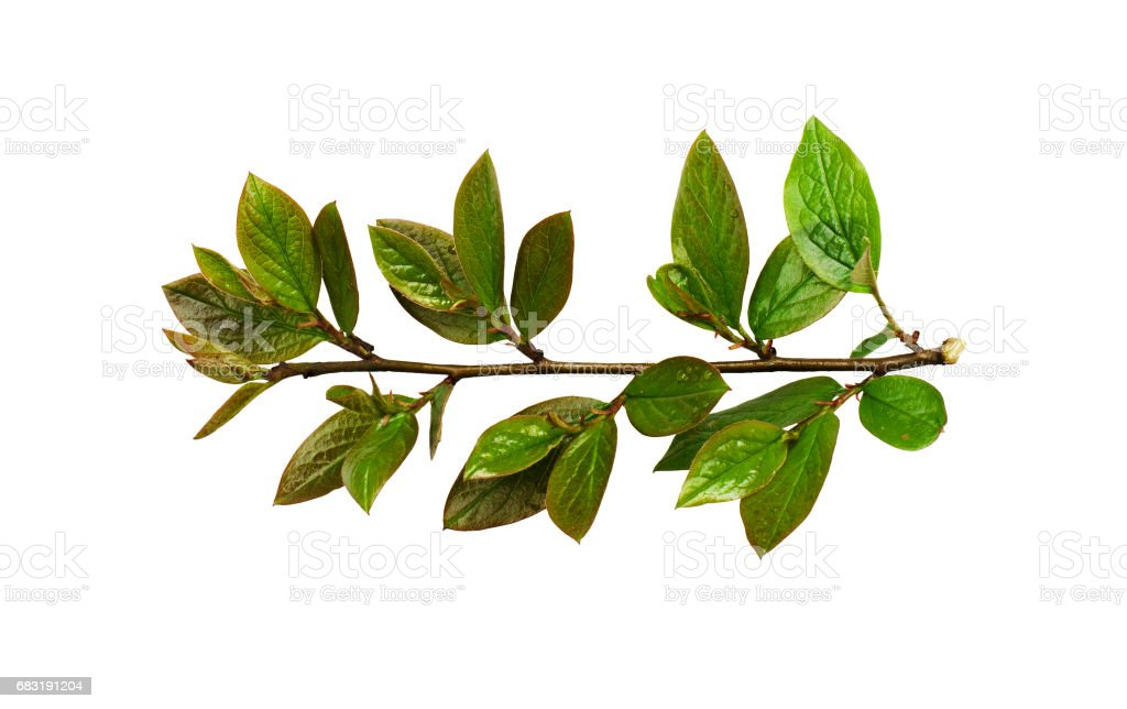신선한 스프링 녹색 잎 royalty-free 스톡 사진
