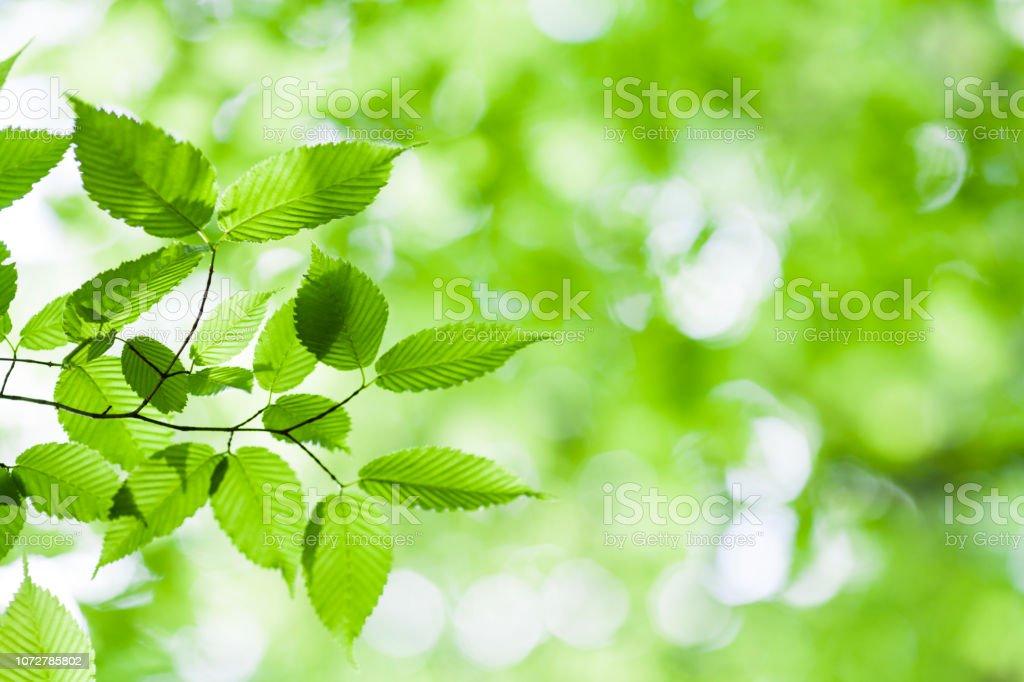 숲에서 신선한 봄 잎 - 로열티 프리 0명 스톡 사진