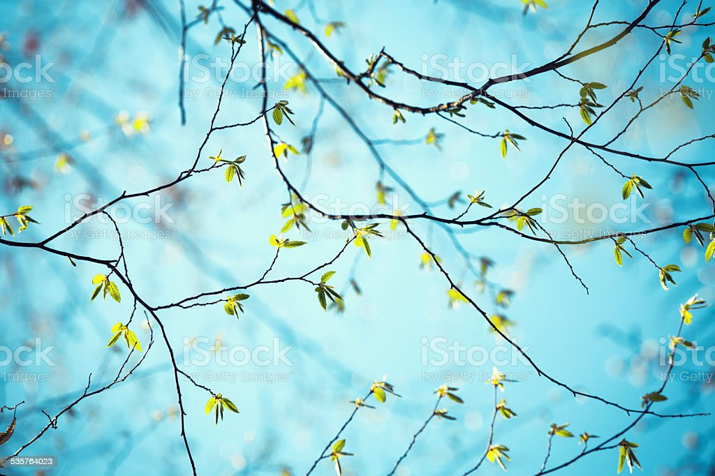 Fresh Spring Leaves On Blue Background stock photo