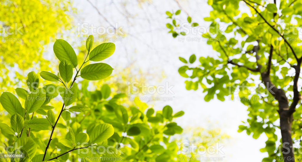 Feuilles fraîches de printemps photo libre de droits