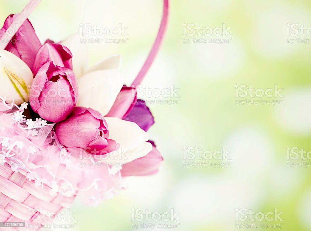 Fresh Spring Tulips in Easter Basket royalty-free stock photo