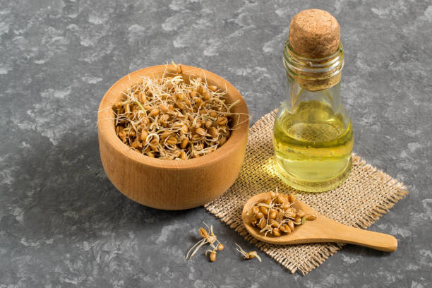Fresh sprouted wheat seeds and wheat germ oil stock photo