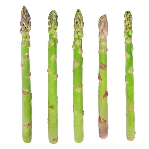 Fresh sprouts of asparagus. stock photo