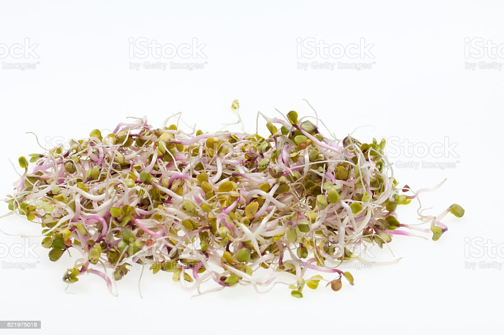 Fresh sprouts stock photo