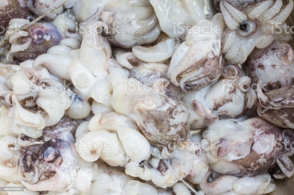 Fresh Squid in market background. royalty-free stock photo
