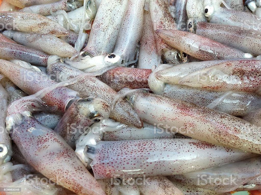 Fresh squid stock photo