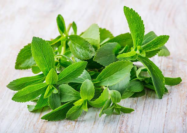 Fresh stevia leaves stock photo