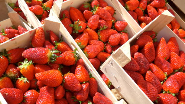 fresh strawberries in wooden boxes at the farmers market, ready for sale - fragole foto e immagini stock