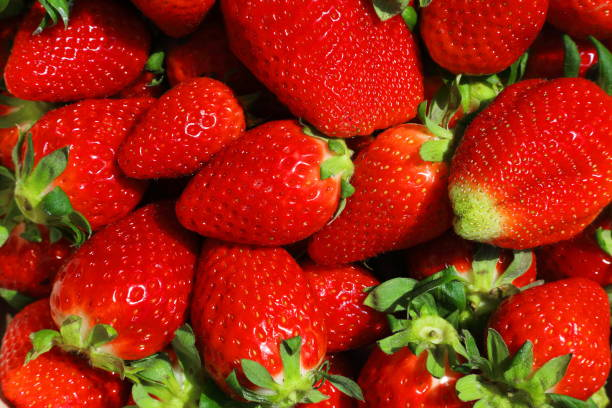 fresh strawberries - pejft stock photos and pictures