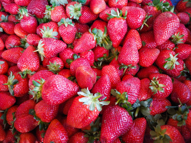 fresh strawberries bunch of red fresh strawberries strawberry field stock pictures, royalty-free photos & images