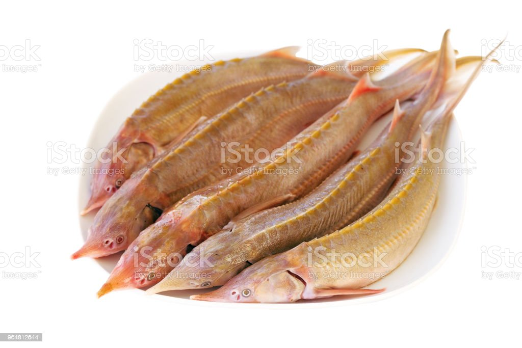 Fresh sturgeon fish on a white plate. royalty-free stock photo