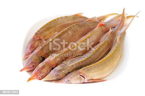 Fresh Sturgeon Fish On A White Plate Stock Photo & More Pictures of Animal