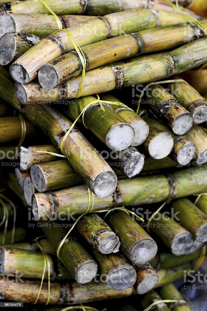 Fresh Sugar Cane royalty-free stock photo