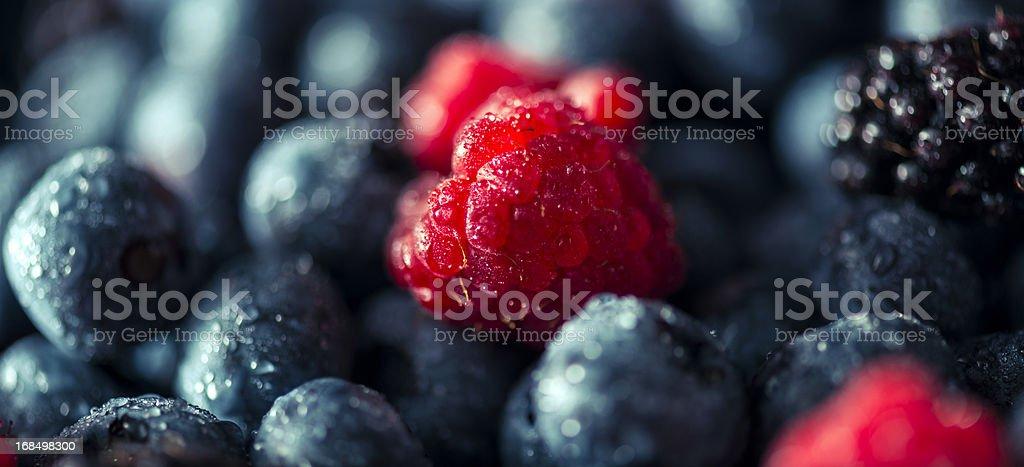 Fresh Summer Berries royalty-free stock photo