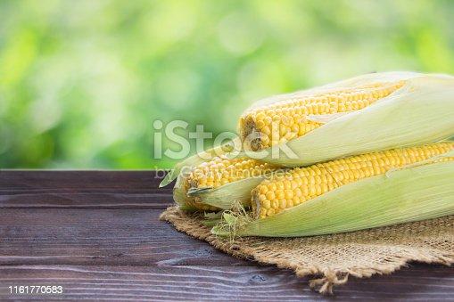 Fresh sweet corn cobs on wooden board. Green nature  background.Summer harvest