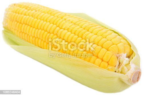 Fresh sweet corn isolated on white background