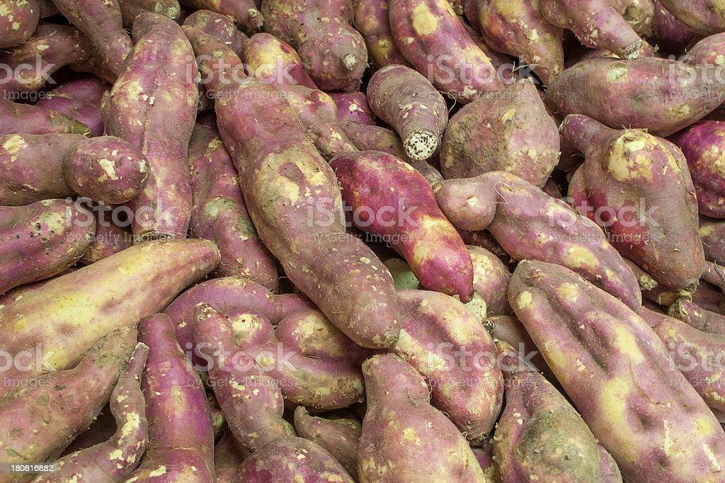 Fresh sweet potatoes royalty-free stock photo