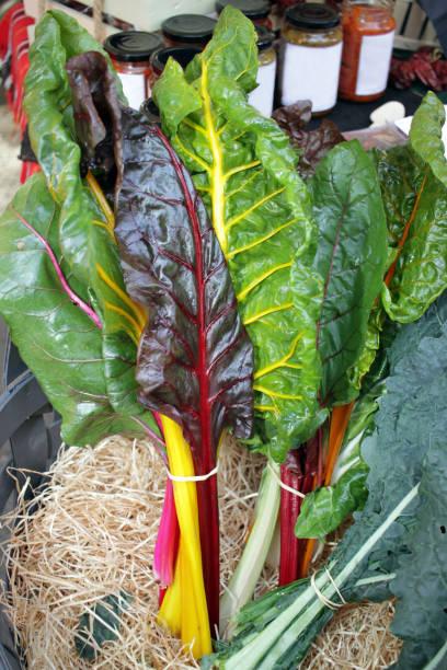 Fresh swiss rainbow chard. Rainbow Chard vegetables. Veins on a leaf of Mangold stock photo