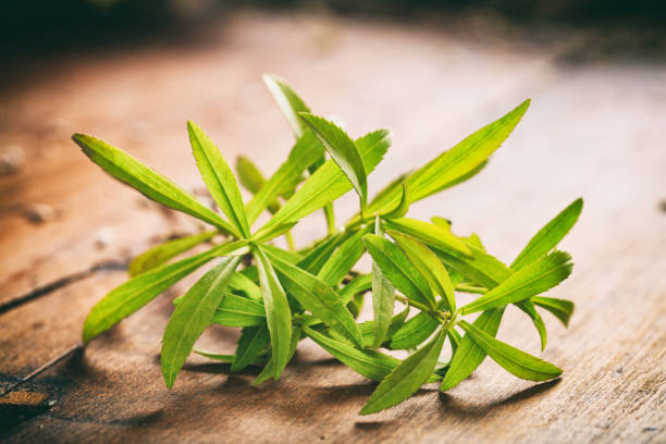 fresh tarragon on wooden background - tarragon stock photos and pictures