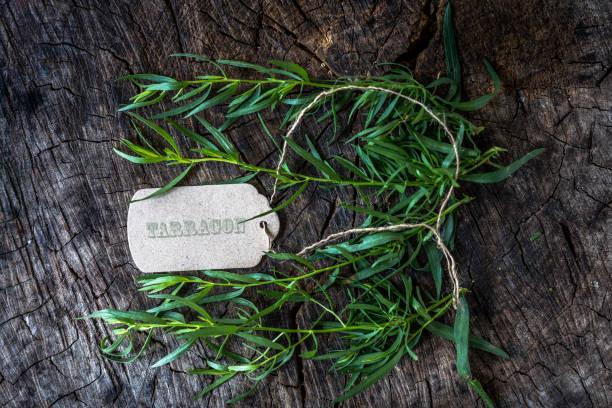 Fresh tarragon on wooden background stock photo