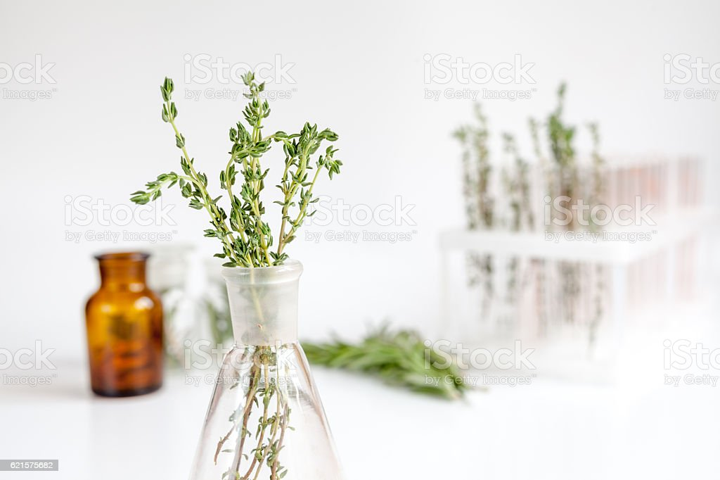 fresh thyme in bottle on white background photo libre de droits