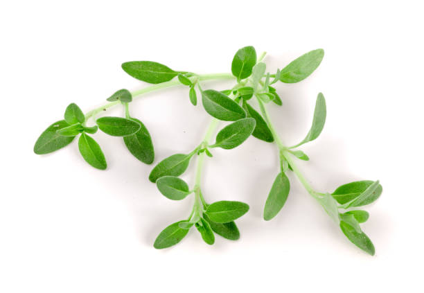 fresh thyme spice isolated on white background - thyme stock photos and pictures