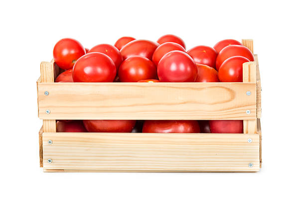 Fresh tomatoes in wooden box stock photo