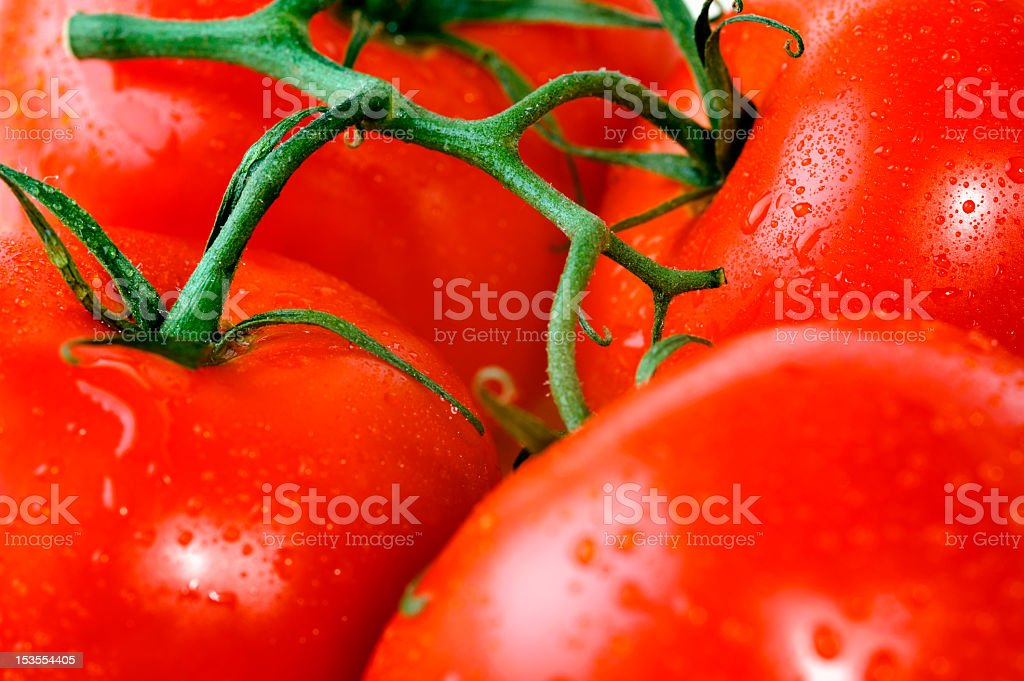 Fresh tomatoes on a branch royalty-free stock photo