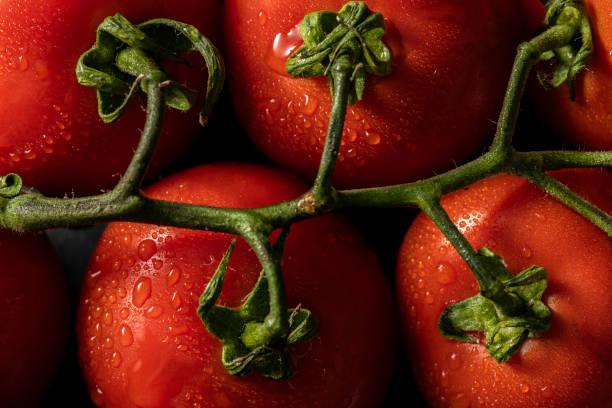 Frische Tomaten auf einem grünen Zweig. – Foto