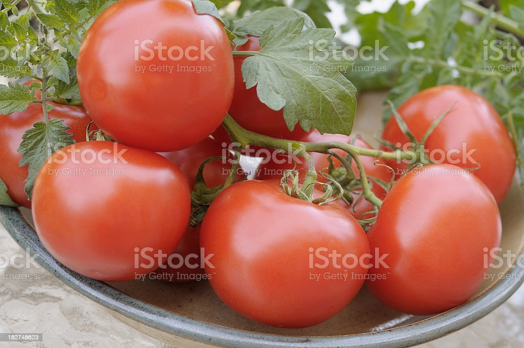 Fresh Tomatoes on vine royalty-free stock photo