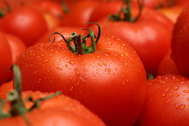 tomates fraîches - tomate photos et images de collection