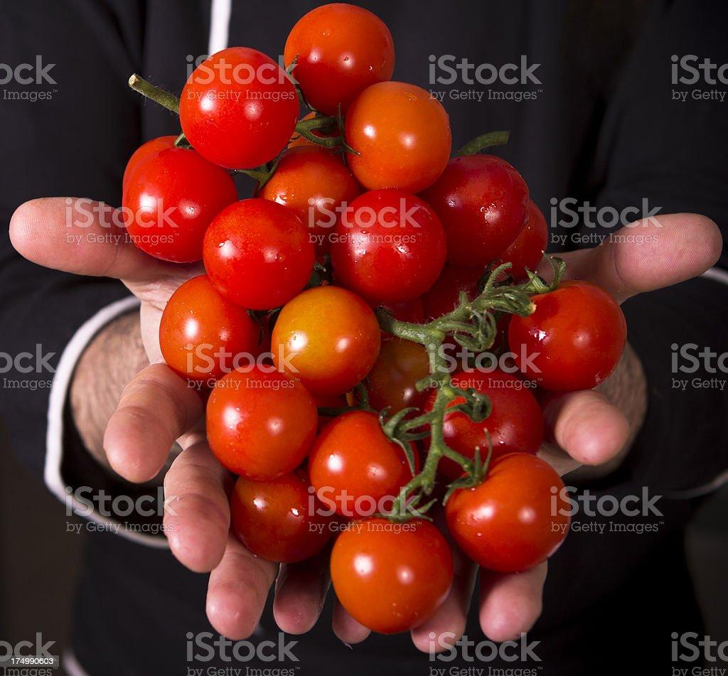 Fresh Tomatos royalty-free stock photo