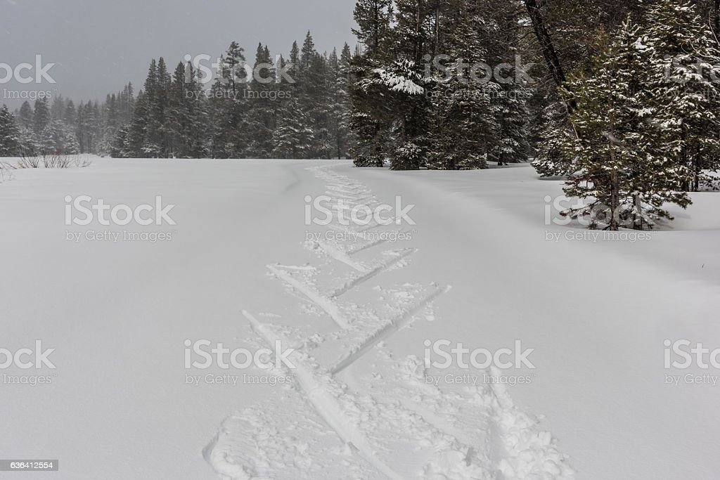 Fresh Tracks stock photo