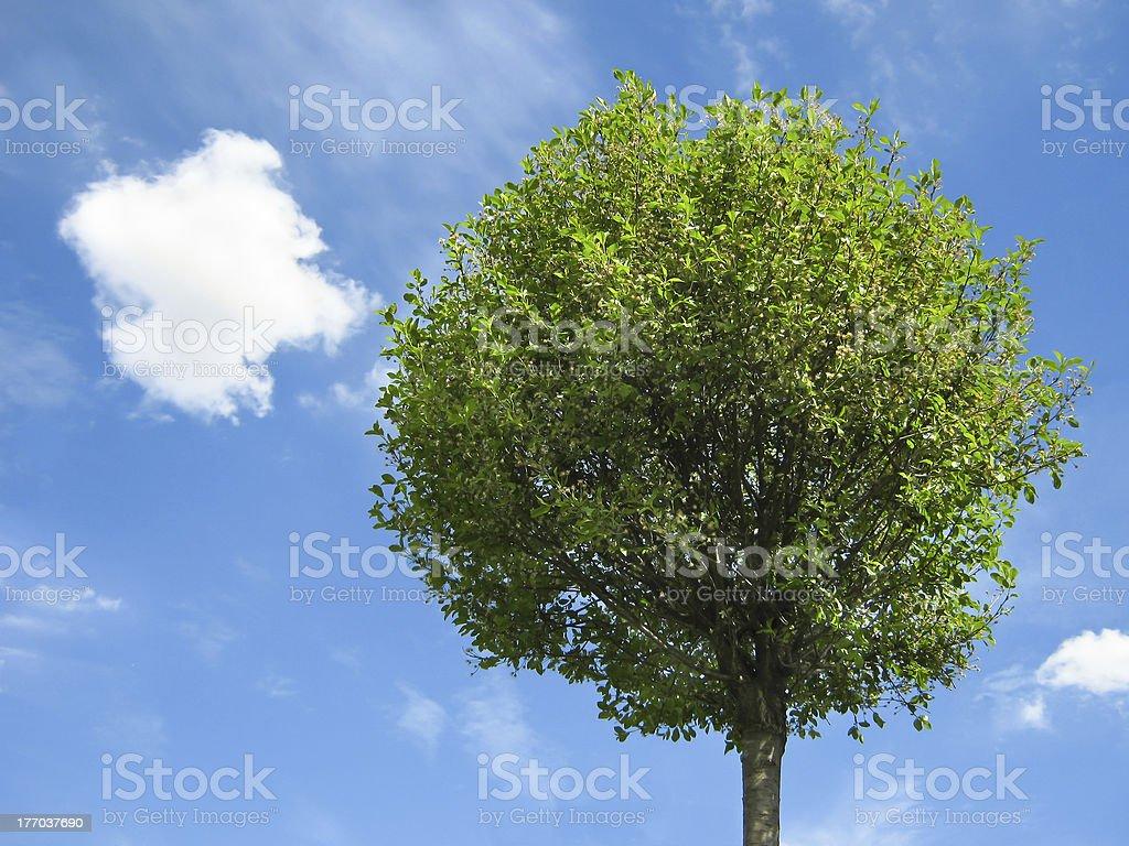 Fresh tree with blue sky royalty-free stock photo