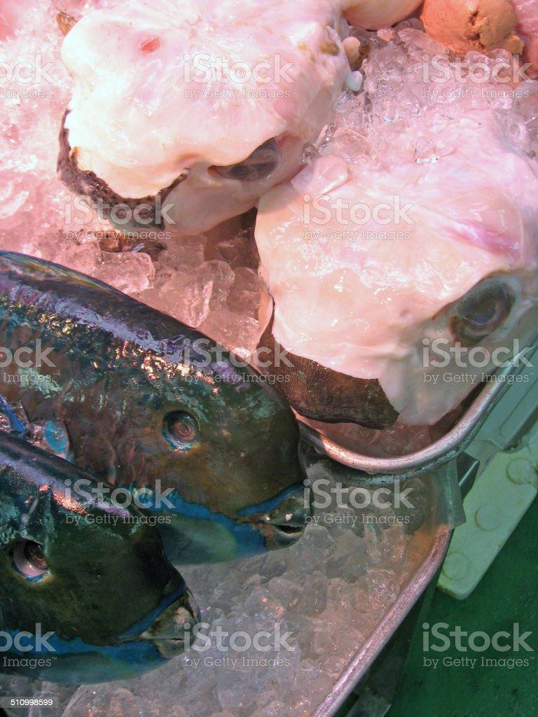 Fresh Tropical Fish On Ice For Sale On Makishi Public Market Stock