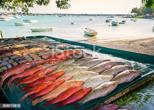 istock Fresh tropical fish outdoor 908015816