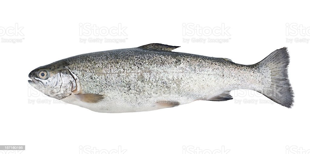 Fresh trout fish isolated royalty-free stock photo