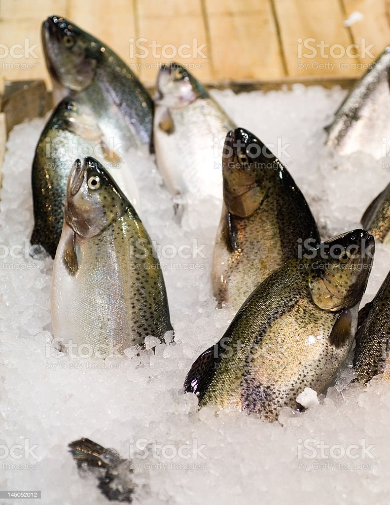 fresh trout fishes at the local market royalty-free stock photo