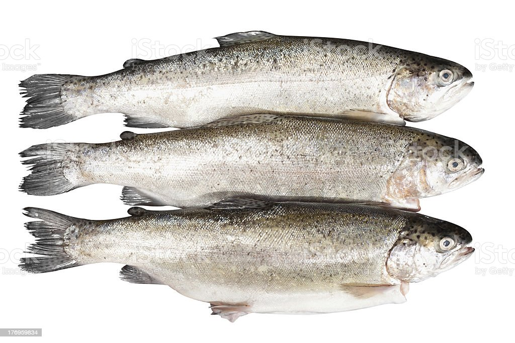fresh trout on white background royalty-free stock photo