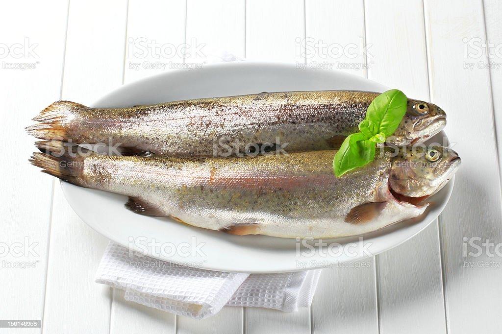 Fresh trouts royalty-free stock photo