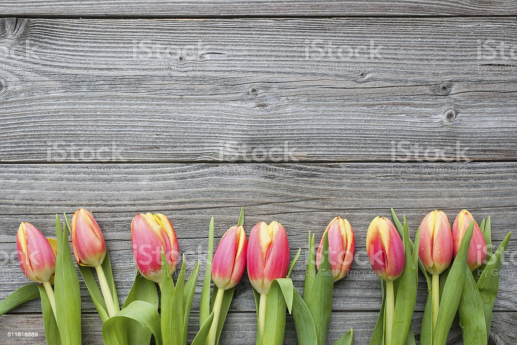 fresh tulips arranged on old wooden backgroun stock photo
