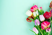Bouquet of fresh tulips flowers on pastel green background with copy space