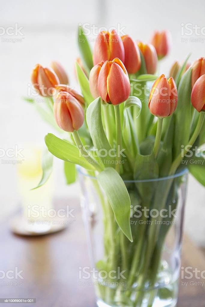 Fresh tulips in vase, close-up royalty-free 스톡 사진