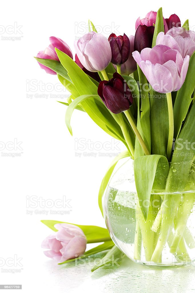 fresh tulips royalty-free stock photo