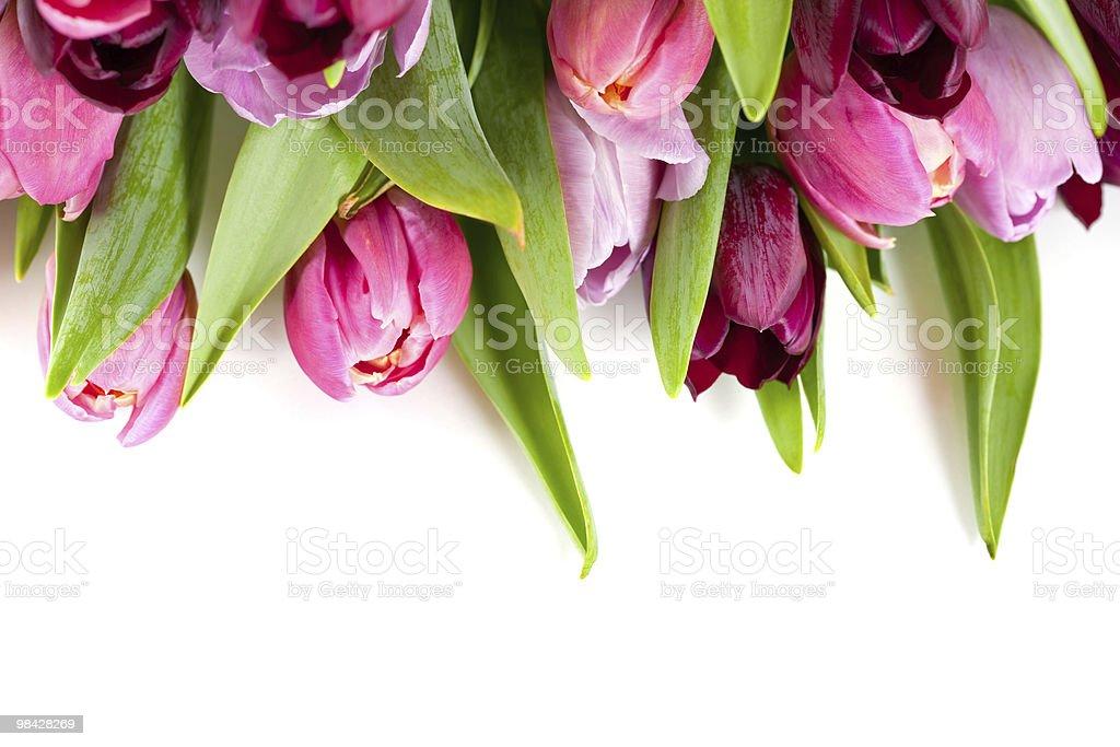 Tulipani freschi foto stock royalty-free