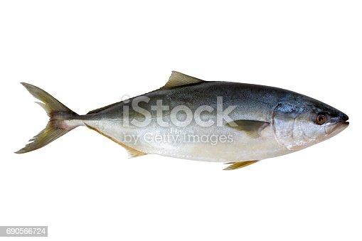 156872766 istock photo Fresh tuna fish isolated 690566724